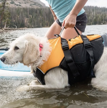 Dog Life jackets with a reinforced lifting harness enclosed around your dog to provide maximum head lifting floatation and easy water retrieval. Dog Life jackets made by floatation experts approved by Surfdog Australia for ultimate safety in water.