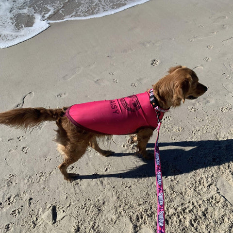 Sun Protection for dogs - Dog Rashies Dog Rashies sun protection for dogs. Surfdog Dog Rashies, tested and made around Aussie dogs for perfect fit and comfort.