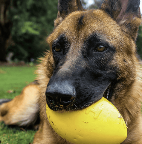 This Dog Footy is an extremely durable dog ball made out of Duralite. Dog Toy that squeaks and is kind to teeth and its super bouncy! Dog toys that are safe fun and non-toxic. Dog toys designed the last. The best dog ball in Australia.
