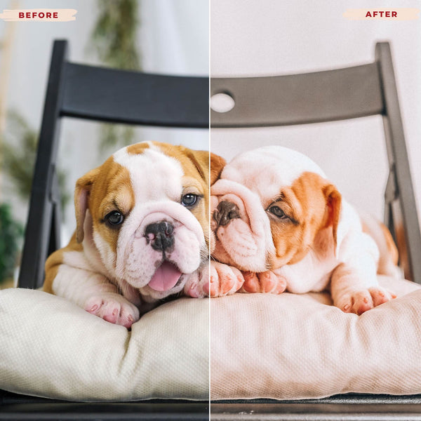 BULLDOG DESKTOP LIGHTROOM PRESETS