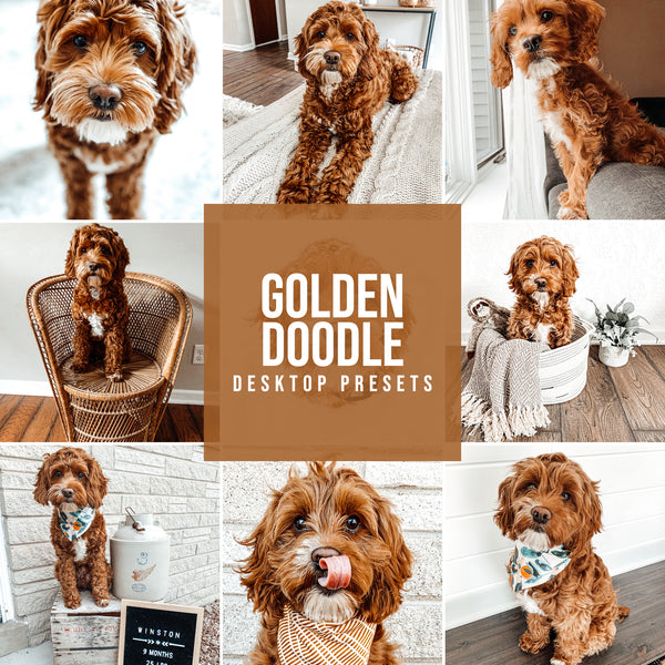 GOLDEN DOODLE DESKTOP LIGHTROOM PRESETS