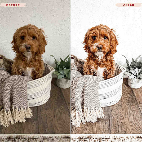 GOLDEN DOODLE MOBILE LIGHTROOM PRESETS