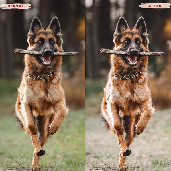GERMAN SHEPHERD MOBILE LIGHTROOM PRESETS