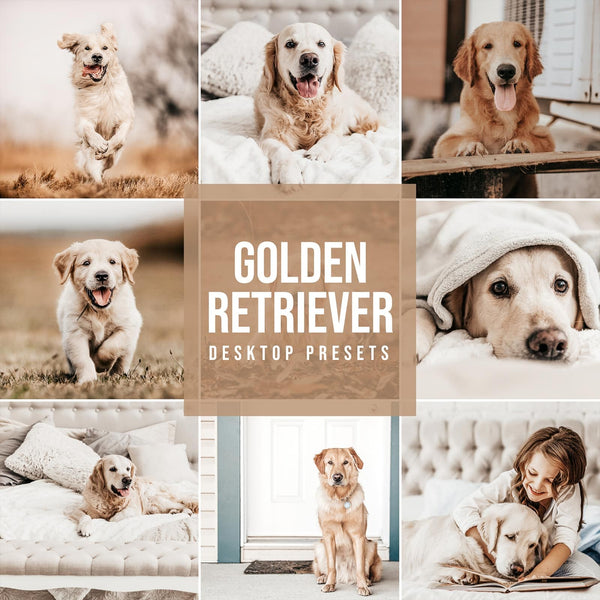 GOLDEN RETRIEVER DESKTOP LIGHTROOM PRESETS