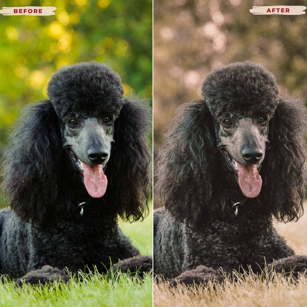 POODLE DESKTOP LIGHTROOM PRESETS