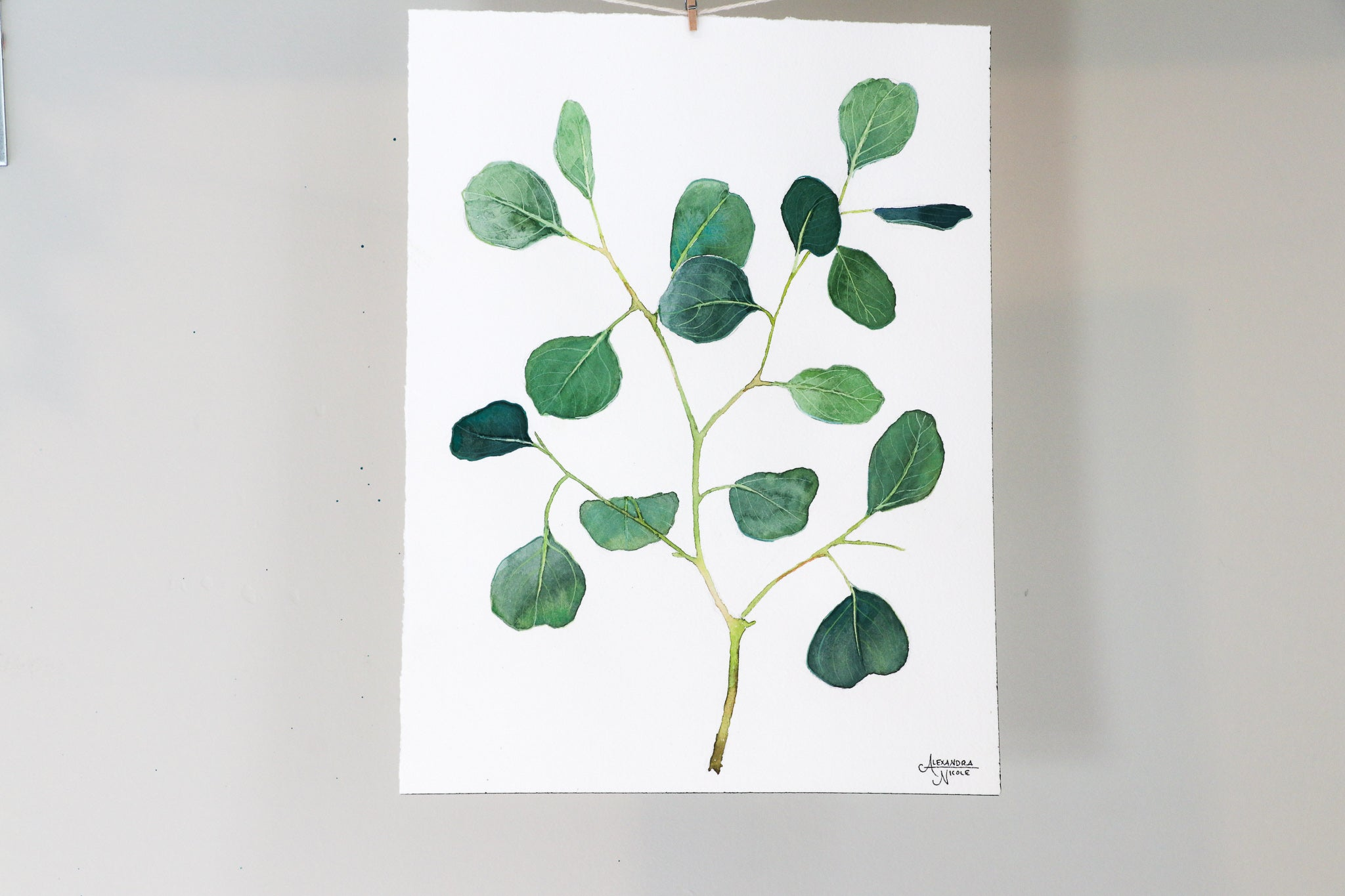 Silver Dollar Eucalyptus - Watercolor Painting by Coastal Artist Alexandra Nicole $150