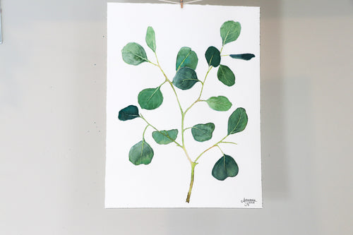 Silver Dollar Eucalyptus - Watercolor Painting