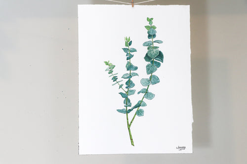 True Blue Eucalyptus - Watercolor Painting