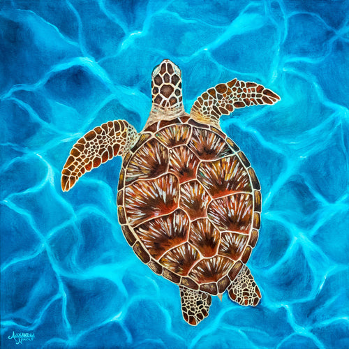 Green Sea Turtle Art Print