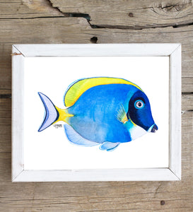 Powder Blue Tang Fish Art Print by Alexandra Nicole