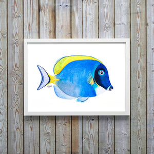 Framed Watercolor Powder Blue Tang Fish Art Print by Alexandra Nicole
