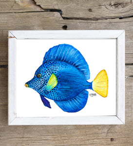 Purple Tang Fish Art Print by Alexandra Nicole