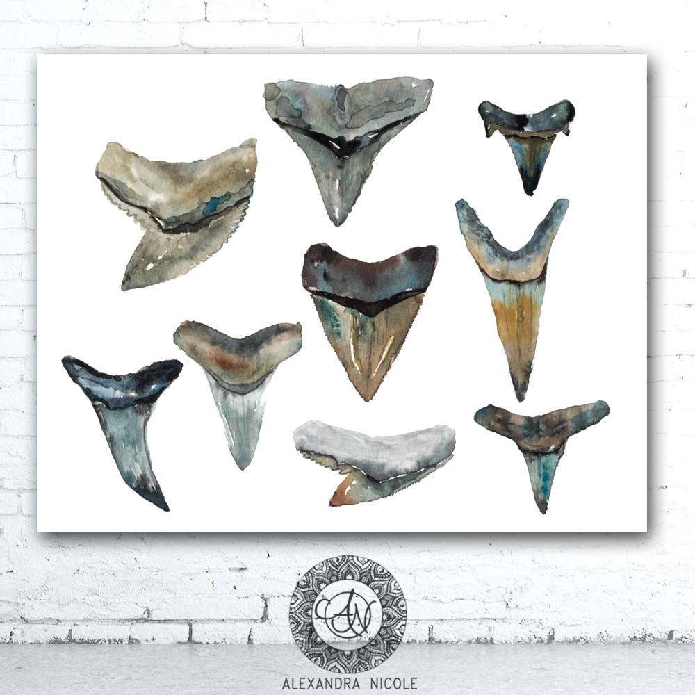 Shark Teeth Collection Watercolor Art Print by Coastal Artist Alexandra Nicole $27