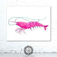 Load image into Gallery viewer, Pink Shrimp Print by Alexandra Nicole