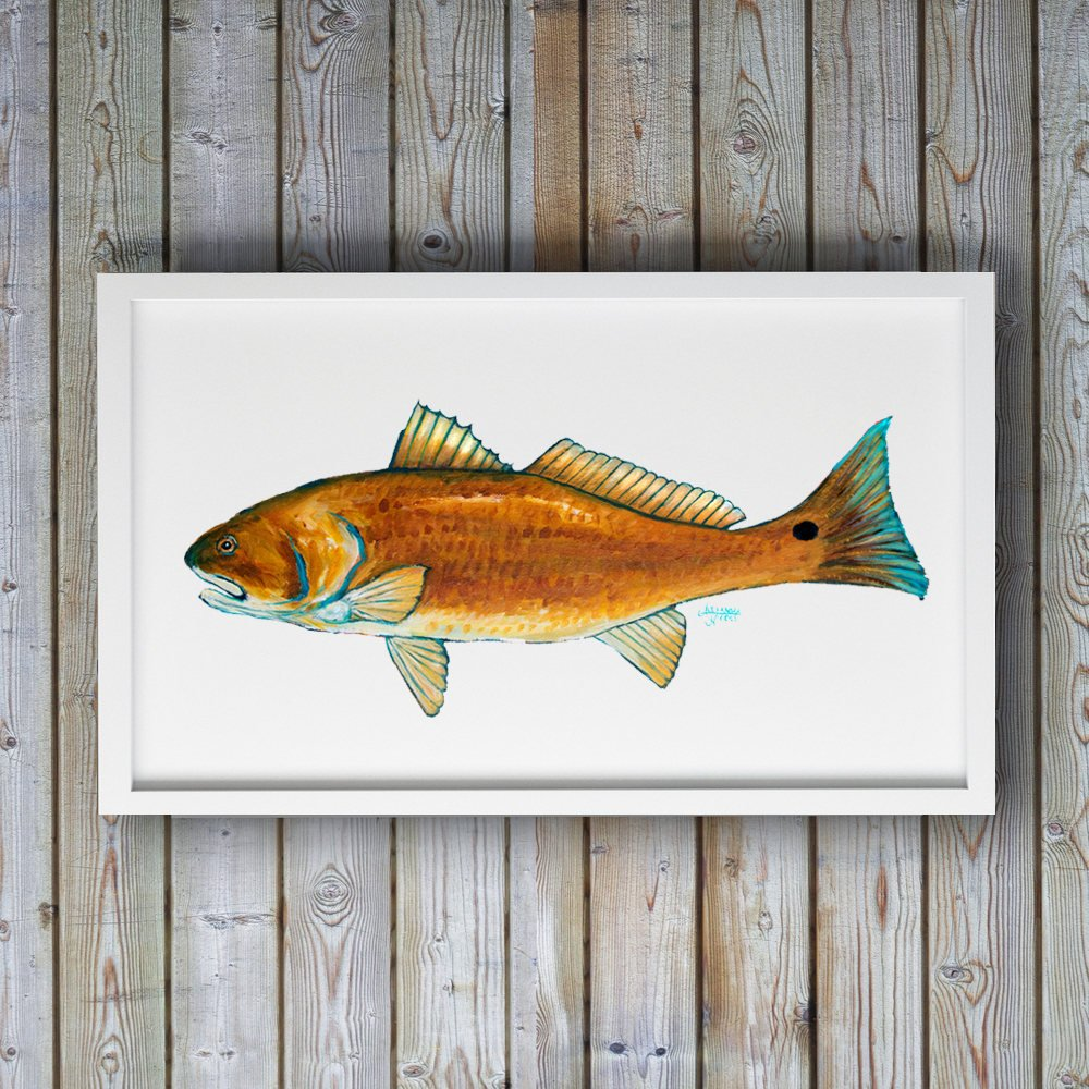 Red Drum Fish Print by Coastal Artist Alexandra Nicole $27