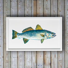 Load image into Gallery viewer, Speckled Trout Art Print by Alexandra Nicole