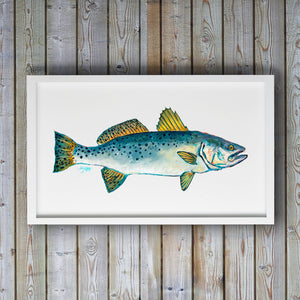 Speckled Trout Art Print by Alexandra Nicole
