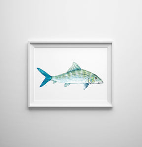 Blue Bone Fish Art Print