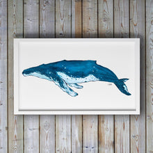Load image into Gallery viewer, Blue Humpback Whale Art Print