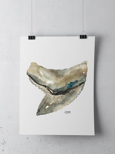 Shark Tooth Tiger Watercolor Art Print Minimalist Decor by Alexandra Nicole