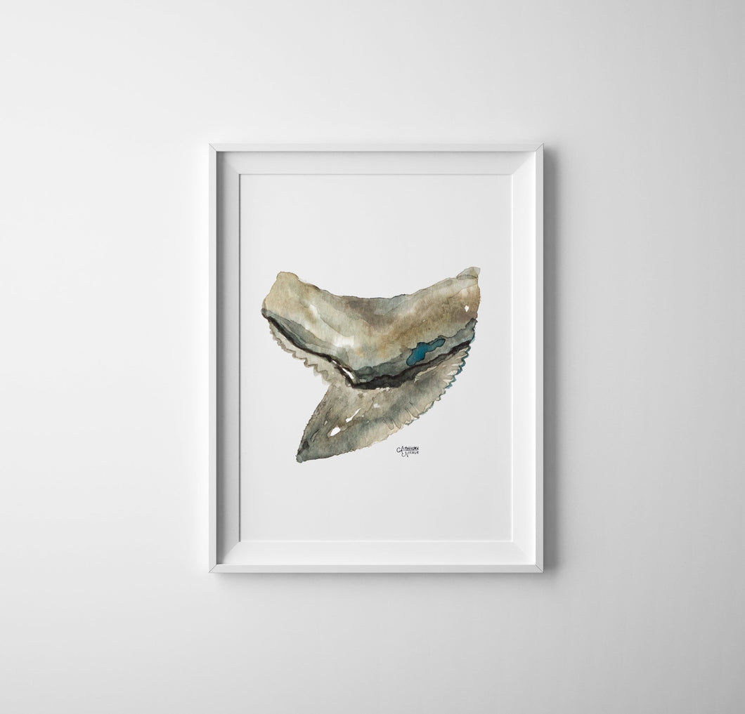Shark Tooth Tiger Watercolor Art Print Minimalist Decor - Shark Tooth No. 4