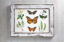 Load image into Gallery viewer, Butterfly Botanical Illustration Art Print by Alexandra Nicole