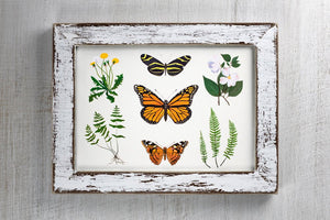 Butterfly Botanical Illustration Art Print by Alexandra Nicole