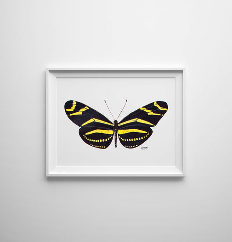 Butterfly Art Print Zebra Longwing