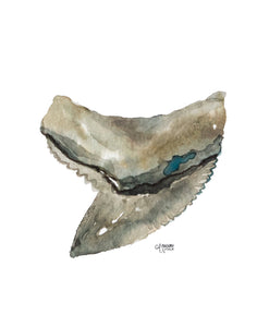 Shark Tooth Tiger Watercolor Art Print by Alexandra Nicole
