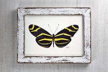 Load image into Gallery viewer, Butterfly Art Print Zebra Longwing Black and Golden Tones
