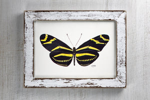 Butterfly Art Print Zebra Longwing Black and Golden Tones