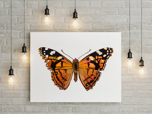 Painted Lady Butterfly Print Minimalist Nature Print