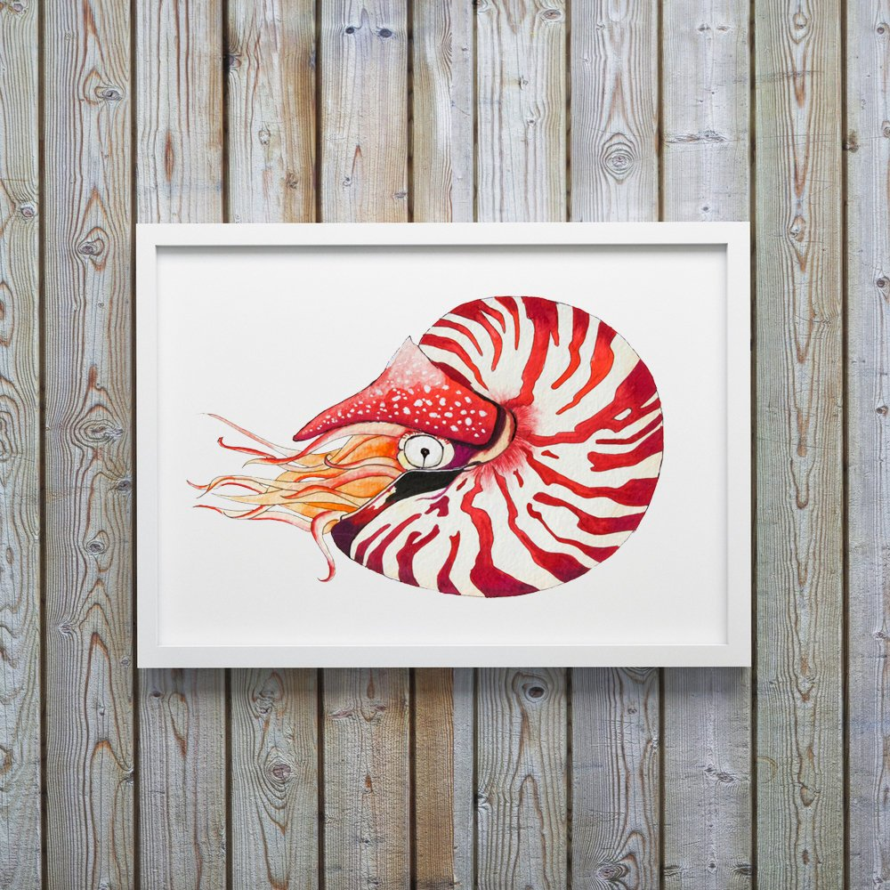 White Framed Nautilus Shell Watercolor Art Print by Coastal Artist Alexandra Nicole $27