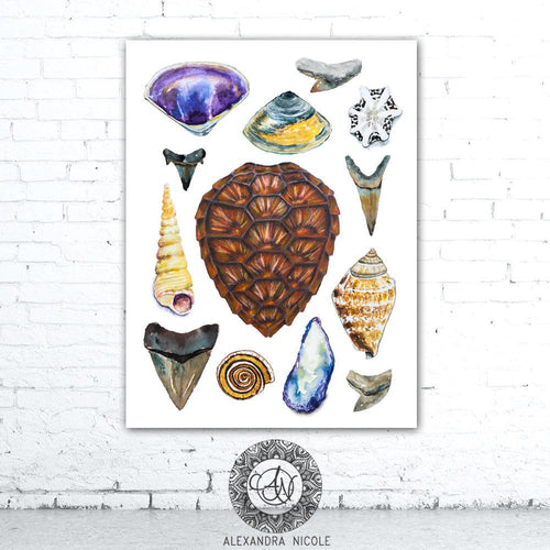 Sea Shell Collection Art Print, Watercolor Sea Shells Art