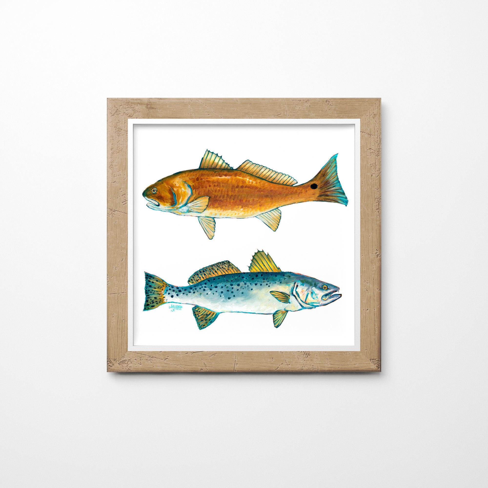Red Drum and Trout Fish Print by Alexandra Nicole