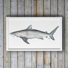 Load image into Gallery viewer, Tiger Shark Art Print