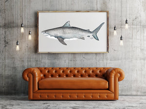 Tiger Shark Art Print by Alexandra Nicole