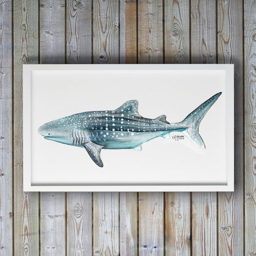Whale Shark Watercolor Art Print by Alexandra Nicole