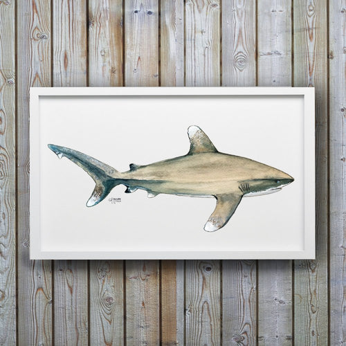Oceanic Whitetip Shark Art Print by Alexandra Nicole