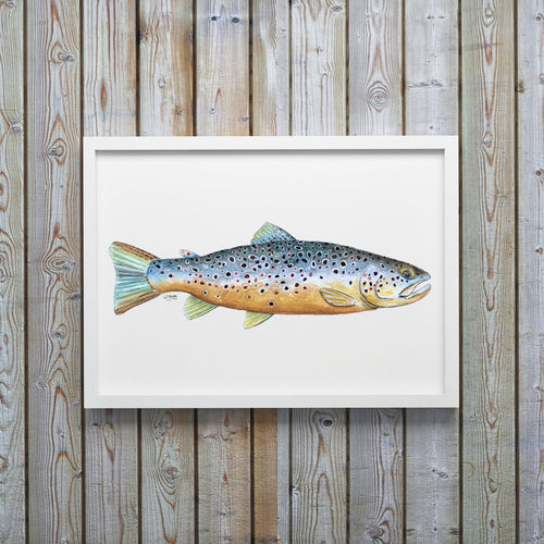BrownTrout Watercolor Art Print, Fish Decor, Coastal Art, Fish Print