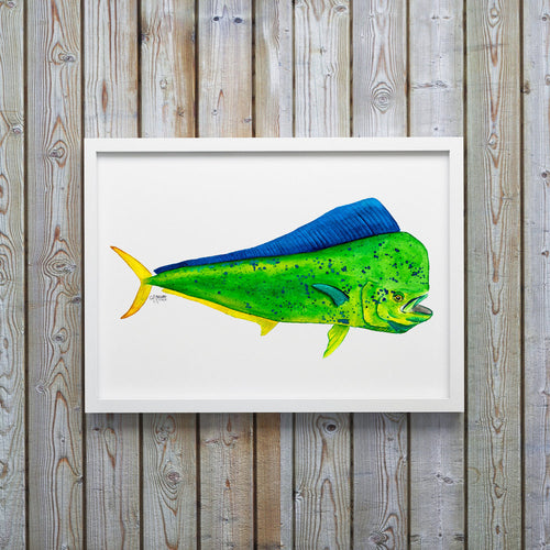 Mahi Mahi Watercolor Art Print, Fish Decor, Coastal Art, Fish Print