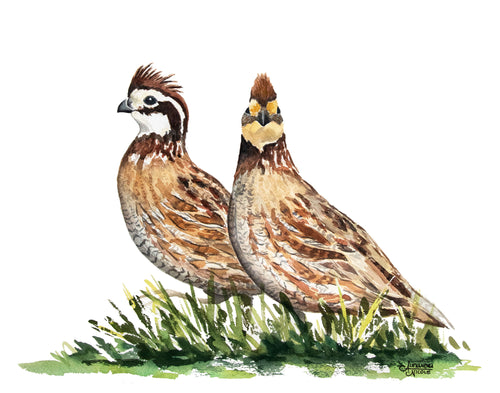 Quail Art Print, Quail Painting, Bobwhite Quail, Quail Watercolor Painting, Bird Painting, Gifts for Him, Hunting Gifts for Him, Fathers Day