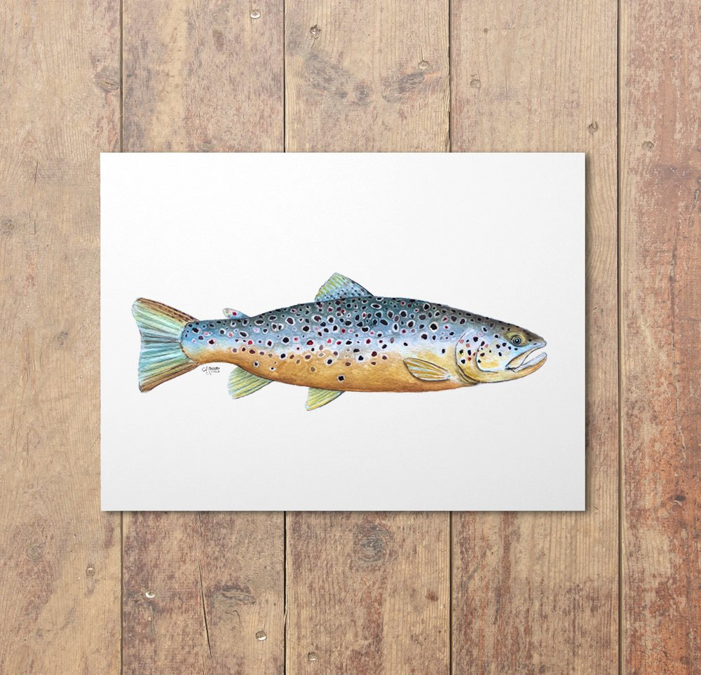 Brown Trout Watercolor Art Print by Coastal Artist Alexandra Nicole $27