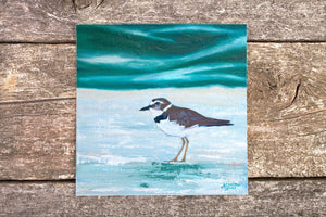 Plover Art Print, Bird Print, Wilson Plover Painting, Coastal Bird Art