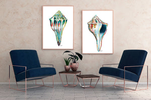 Sea Shell Wall Art, Discounted Print Set, Shell Watercolor Print, Sea Shell Art, Shell Print