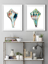 Load image into Gallery viewer, Sea Shell Wall Art, Discounted Print Set, Shell Watercolor Print, Sea Shell Art, Shell Print