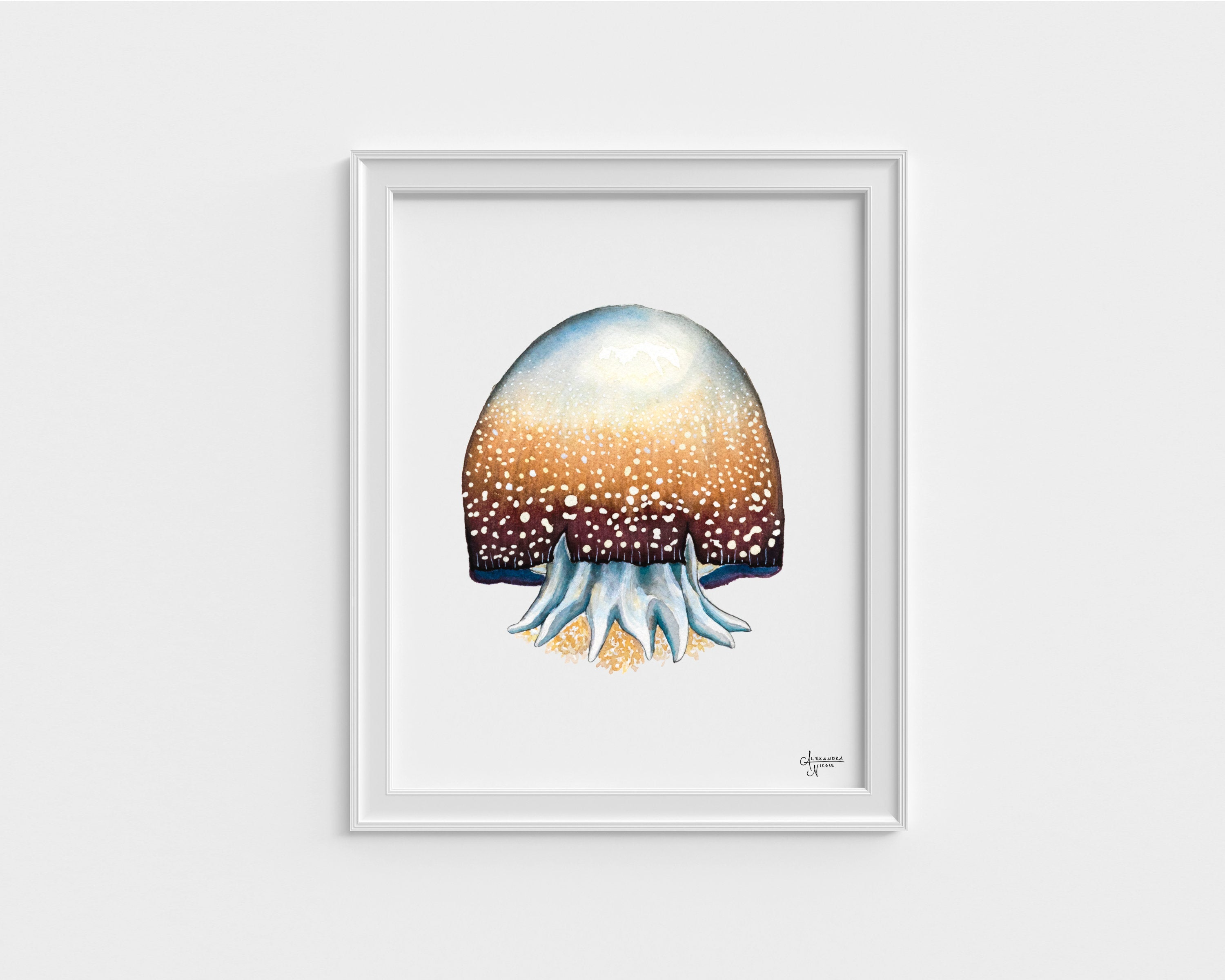 Jellyfish Fine Art Print, Watercolor Sea Creatures by Coastal Artist Alexandra Nicole $27
