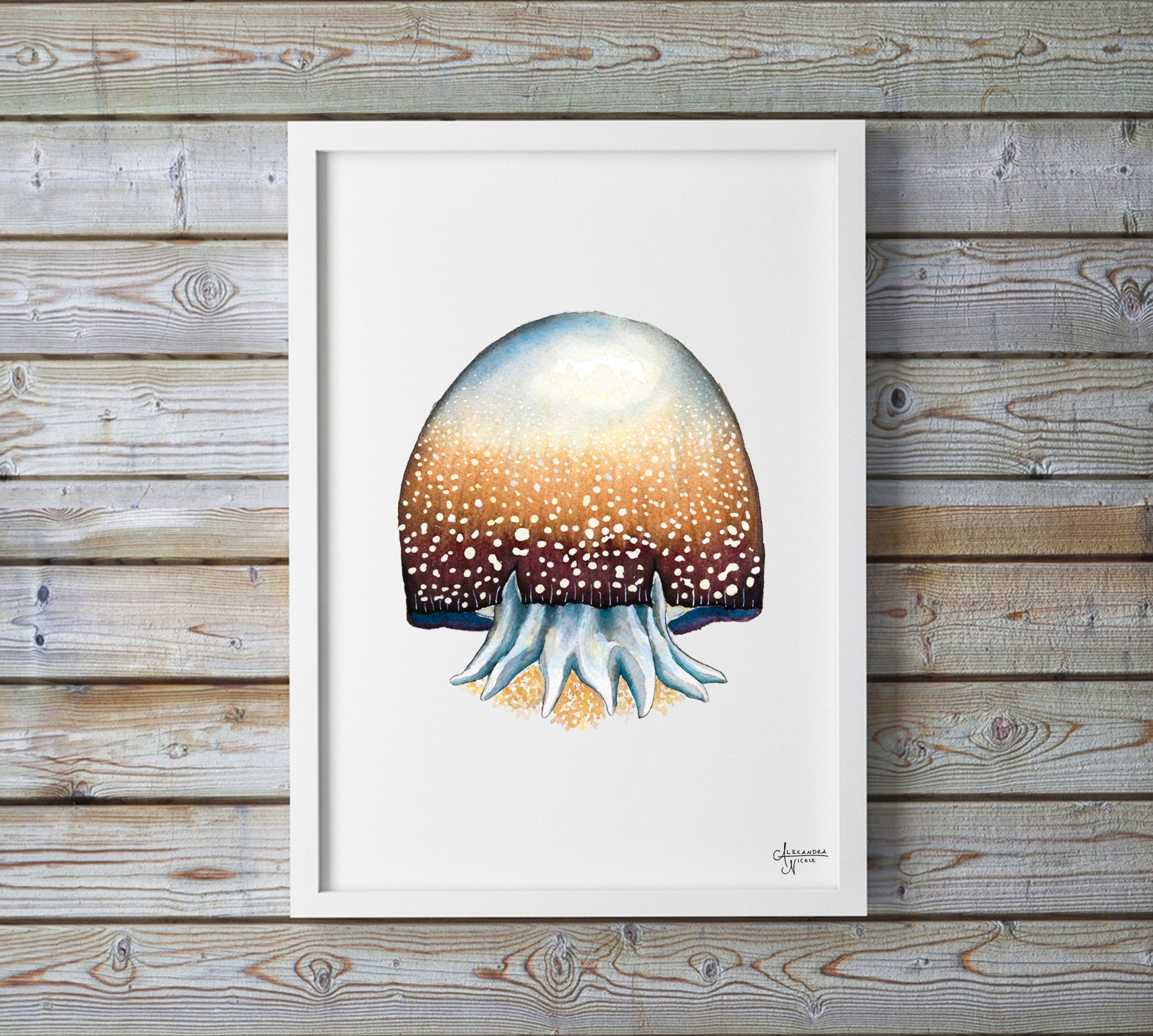 Cannonball Jellyfish Fine Art Print, Watercolor Sea Creatures by Coastal Artist Alexandra Nicole $27