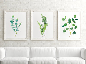 Set of 3 Botanical Prints, Botanical Art, Plant Wall Art, Eucalyptus Print, Fern Print, Plant Print Sets