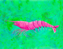 Load image into Gallery viewer, Pink Shrimp Painting
